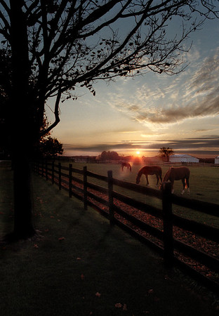 Horse farm at sunset - Manchester, Michigan