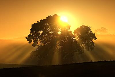 Morning Sun near Rives Junction, MI