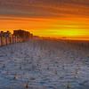 Phragmite Sunrise