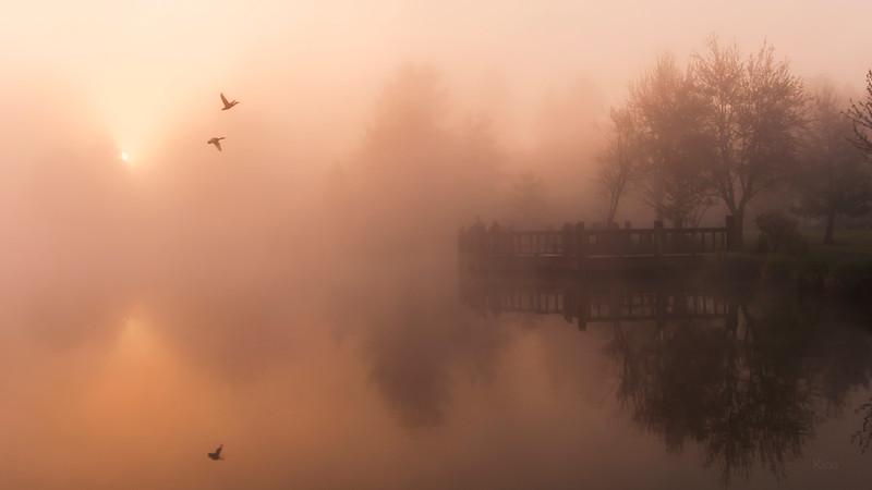 Foggy Flight
