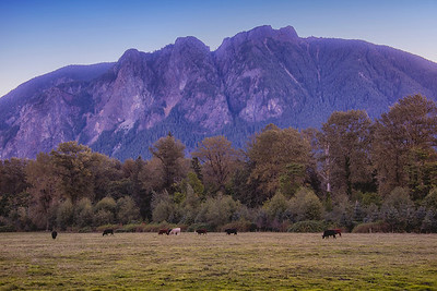 Cattle Pasture Mount Si Dawn's Early Light