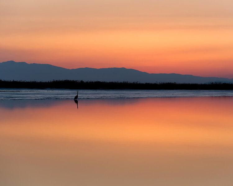 Lone Heron at Sunset
