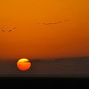 Birds Flying into the Sunrise, Amboseli National Park, Kenya, East Africa