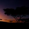 Pre-dawn in Ngorogoro Crater, Tanzania, East Africa