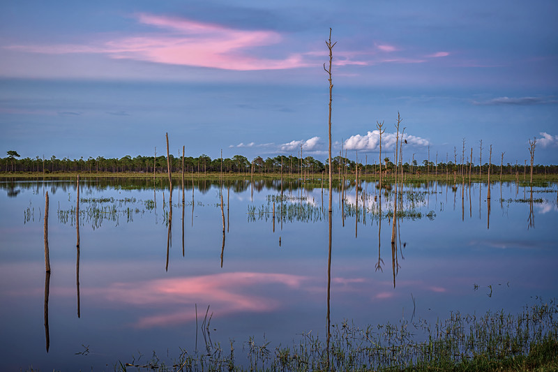 Sunset and reflection in marsh at Babcock Wildlife Management Area near Punta Gorda, Florida