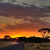 Driving Into the Sunrise in Amboseli National Park, Kenya