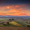 Olive Trees and Vineyard in Tuscany at sunrise, Italy