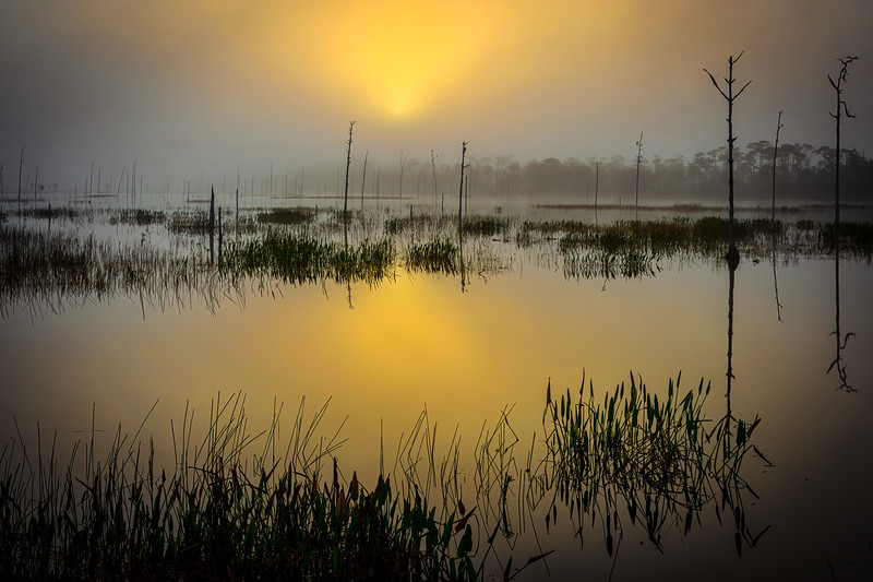 Sunlight starts to break through the fog at the marsh at Babcock Wildlife Management Area near Punta Gorda, Florida.  Fred C. Babcock/Cecil M. Webb Wildlife Management Area is Florida's oldest Wildlife Management Area and protects 80,772 acres just south and east of Punta Gorda in Charlotte and Lee Counties, Florida.