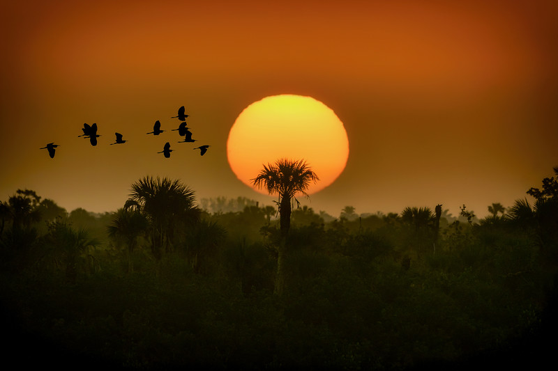 First sunrise of the new year at Ten Thousand Islands National Wildlife Refuge near Naples, Florida