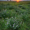 Sunset with wildflowers along Interstate 90 in South Dakota