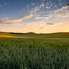 Sunset over wheat fields near Palouse, Eastern Washington State