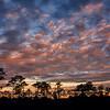Sunrise over Slash Pine trees at Babcock Wildlife Management Area near Punta Gorda, Florida