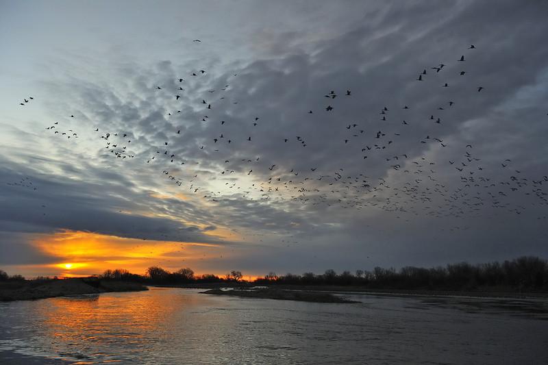Sunrise with Sandhill Cranes, Platte River near Kearney, Nebraska