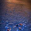 Sunrise with seashells on Bowman Beach, Sanibel Island, Florida