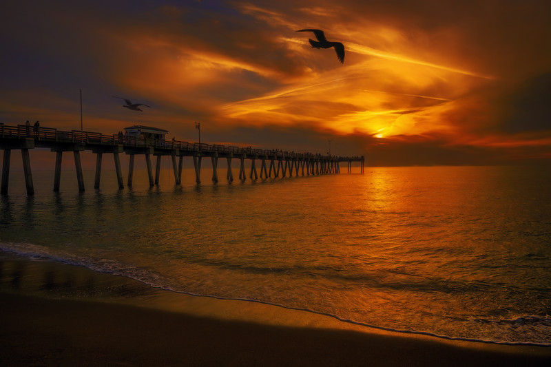 Gulls flying overhead at the Venice Fishing Pier at sunset.  The fishing pier is a 700-foot fishing pier which offers fishing without a license.  The Venice Fishing Pier is located at Brohard Park on the south end of the island of Venice, Florida.