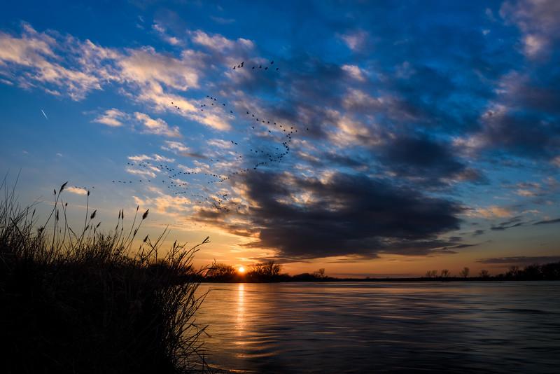 Sandhill Cranes flying over the Platte River at sunset, Nebraska