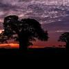 Baobab tree at sunrise, Tarangire National Park, Tanzania, East Africa