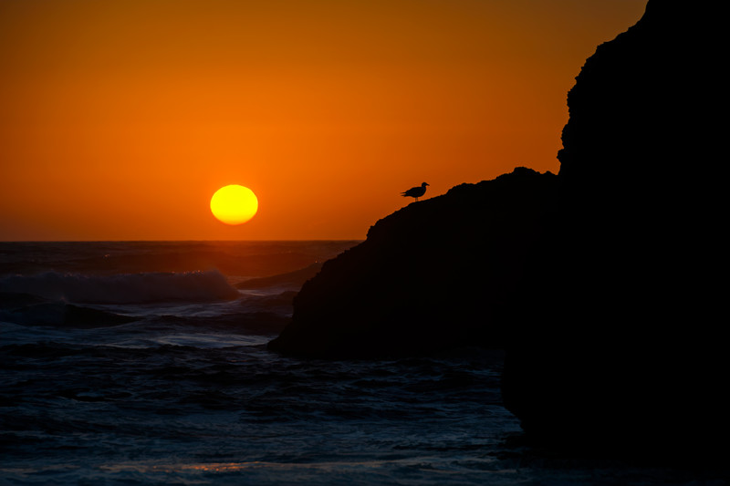 Sunset with seagull silhouette on Bandon Beach, Oregon