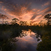 Sunset in Fred C. Babcock/Cecil M. Webb Wildlife Management Area near Punta Gorda, Florida