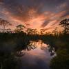 Sunset in Fred C. Babcock/Cecil M. Webb Wildlife Management Area near Punta Gorda, Florida