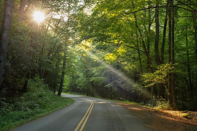 Rays Through The Trees
