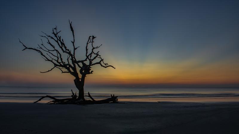 Driftwood Beach, Jekyll Island, Ga.