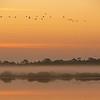 Birds In The Morning Mist