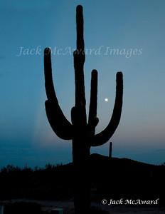 Saguago Moonrise WM
