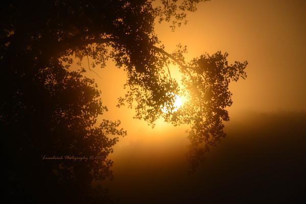 Foggy Limb Sunrise