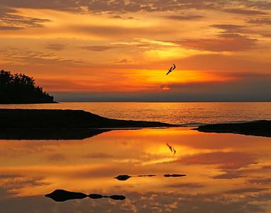 Gooseberry Sunrise 8