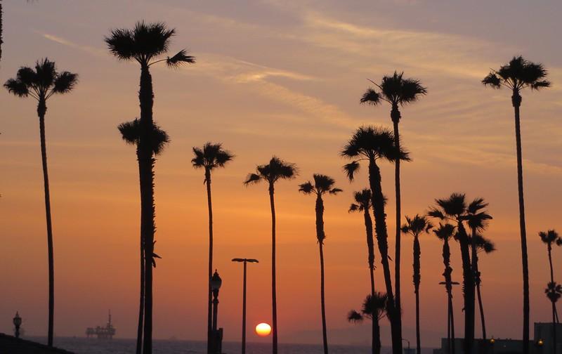 Sunset palms at Huntington Beach
