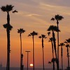 Sunset palms at Huntington Beach