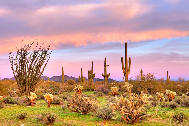 0214 Sonoran Desert