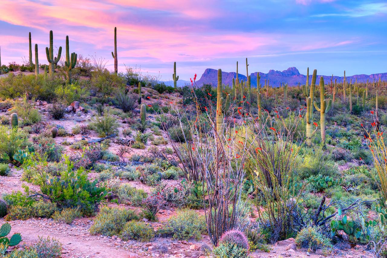 1926 Sonoran Desert