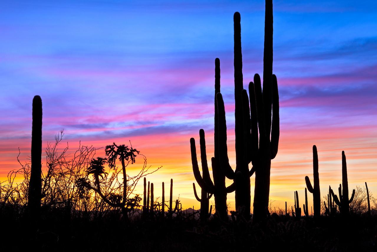 9068 Sunset