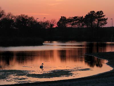 Sunset bassin d'archachon