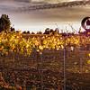 Autumn gravevine sunset 2 signed.jpg
