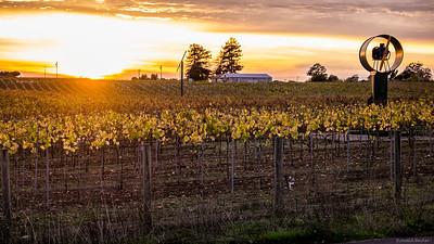 Autumn gravevine sunset signed.jpg