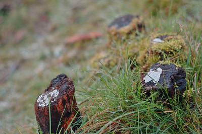 2006 02 09-Burrard Inlet 027 velvia