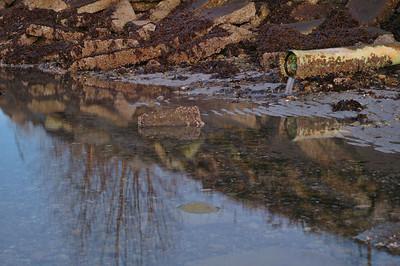 2006 02 09-Burrard Inlet 149 velvia