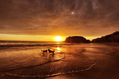 Sunset Playdate