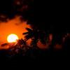 MH 04 - Sunrise Peaking through Pines near Omro