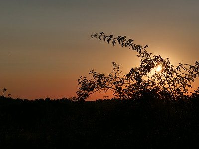 Sunset at Cabbage Hill, Bracknell