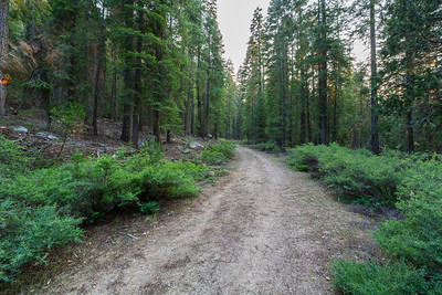 Sunset. Unnamed Trail. Stanislaus National Forest, CA, USA