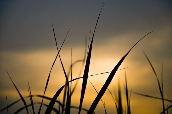 |grass and sunset|
