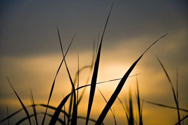 |grass and sunset|