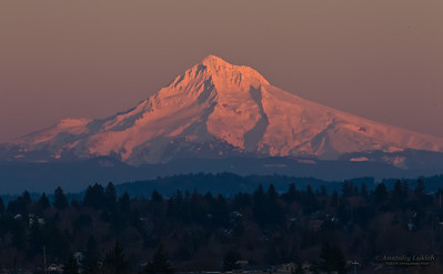 Mount Hood. View of snow capped Mt. Hood with forest in foreground at sunset, Oregon, U.S.A.