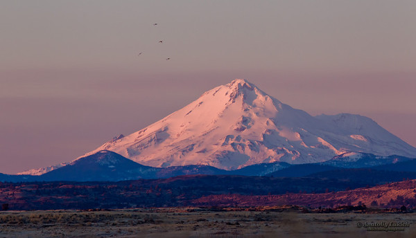 California Landscape: Mount Shasta at sunrise.