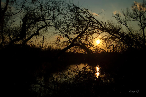 Branchy Sunset
