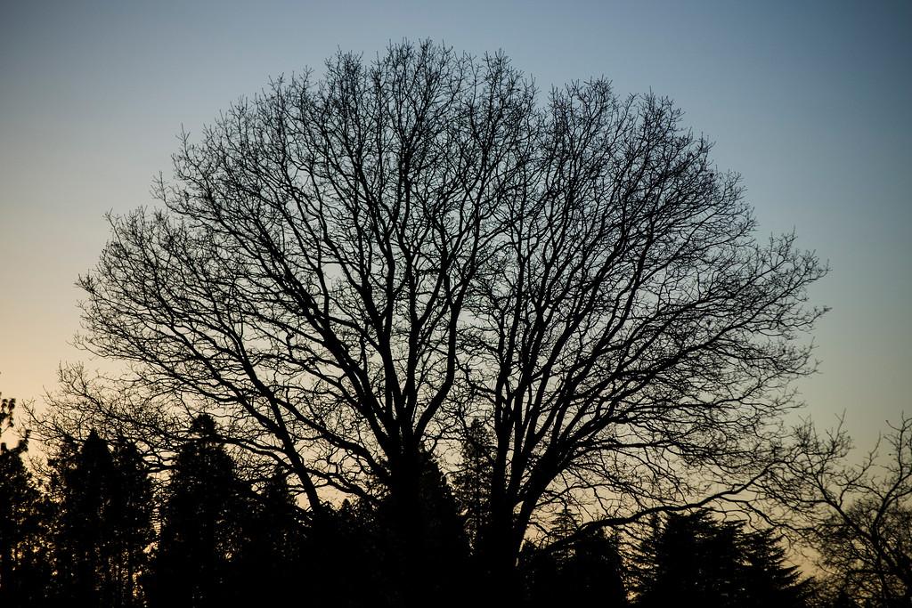 Majestic Tree